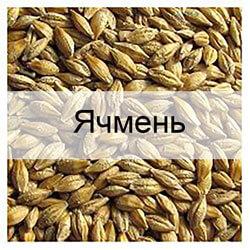 Стандартные образцы зерна ячменя с известными показателями качества