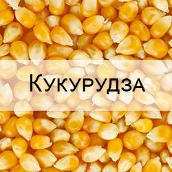 Стандартные образцы зерна кукурузы с известными показателями качества