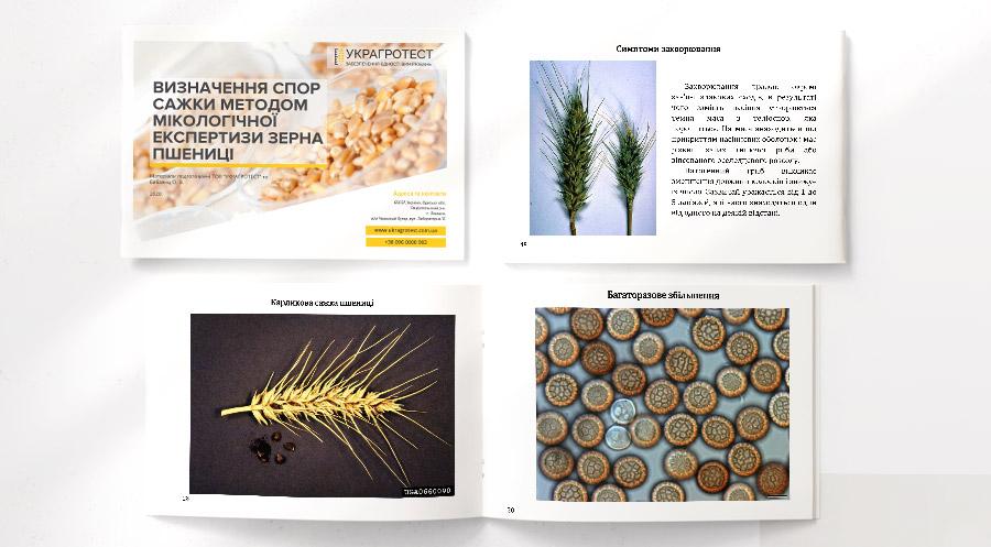 Определение спор головни в зерне пшеницы и другие заболевания