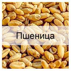 Стандартные образцы зерна пшеницы с известными показателями